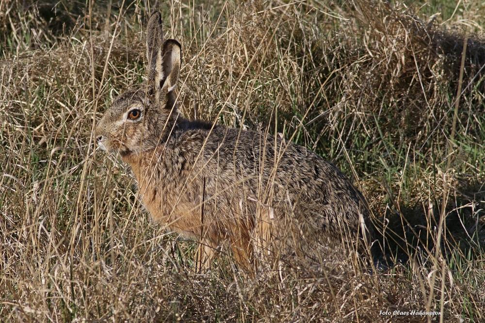 Hare-200406_1000