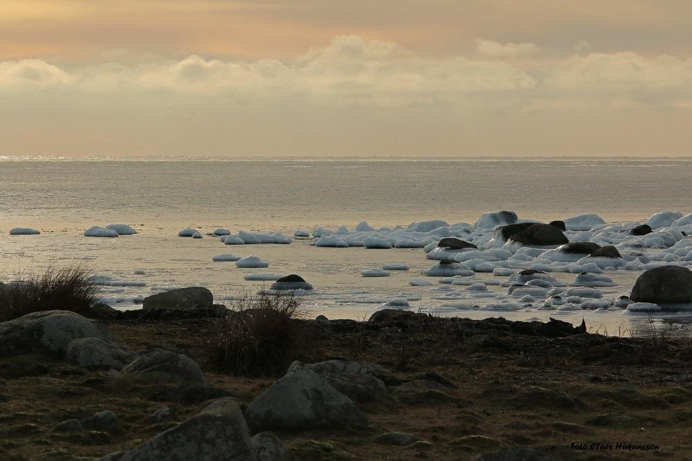 Torhamns udde 160116_1000